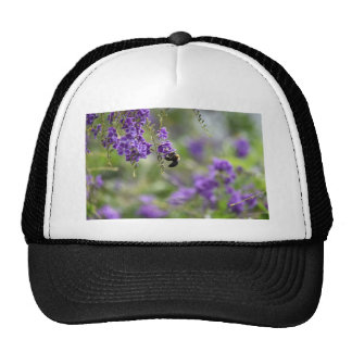 BEE ON FLOWER RURAL QUEENSLAND AUSTRALIA CAP