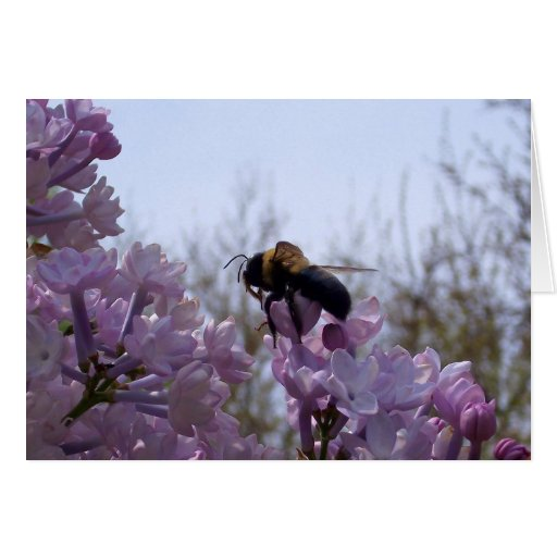 Bee on lilac card