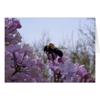 Bee on lilac greeting card