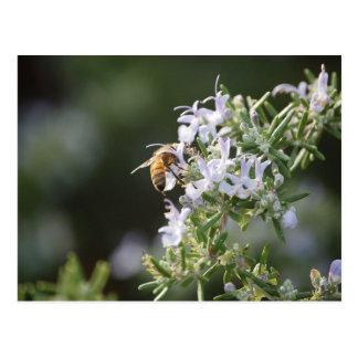 Bee on Rosemary Plant Postcard