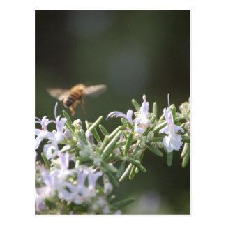 Bee on Rosemary Postcard