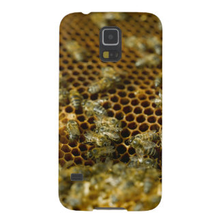 Bees In Hive, Western Cape, South Africa Galaxy S5 Covers