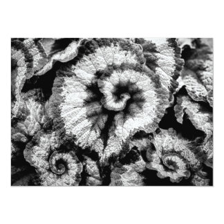 Begonia leaves in black and white card