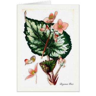 Begonia Rex Card