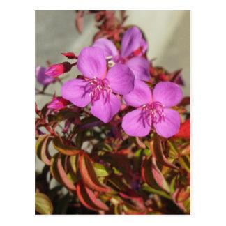 Begonias postcard, customize postcard