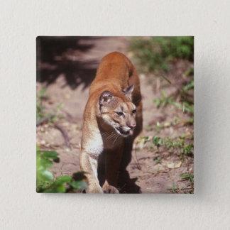 Belize, Jaquar Preserve 15 Cm Square Badge