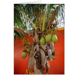 Belize Palm Card