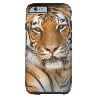 Bengal Tiger iPhone 6 case Tough iPhone 6 Case