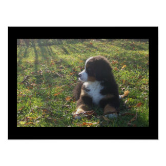 Bernese Autumn Leaves Poster