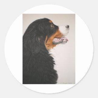 Bernese Mountain Dog 2 Classic Round Sticker