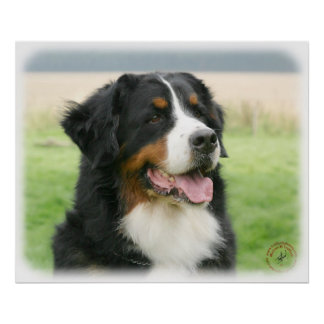 Bernese Mountain Dog 9Y066D-046 Poster