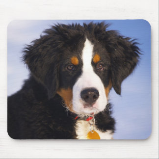Bernese Mountain Dog - Cute Puppy Photo Mouse Pad