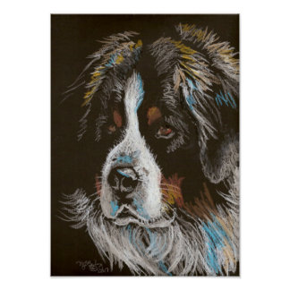 Bernese Mountain Dog Pastel Portrait Poster