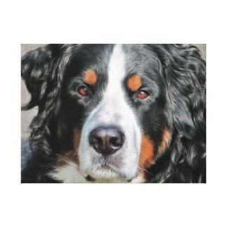 Bernese Mountain Dog Photo Image Canvas Print