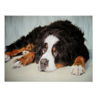 Bernese Mountain Dog Portrait Poster Print