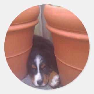 Bernese Mountain Dog Puppy Classic Round Sticker