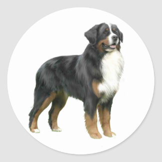 Bernese Mountain Dog - standing Classic Round Sticker