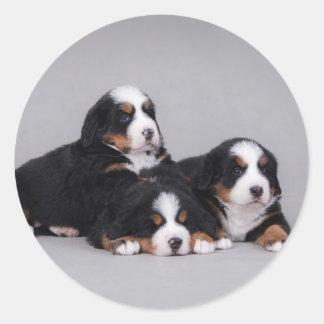 Bernese puppies classic round sticker