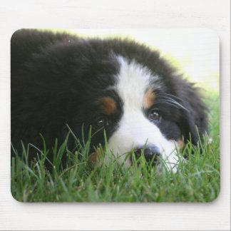 Bernese Puppy Mousepad