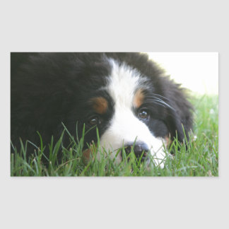 Bernese Puppy Rectangular Sticker