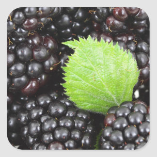 Berries Square Sticker