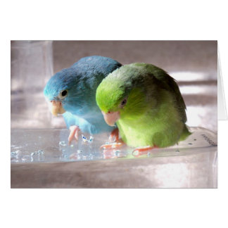 Best Friends Forever Parrotlet Birds Greeting Card