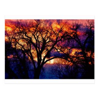 Beyond  The Cottonwood Sunset Postcard