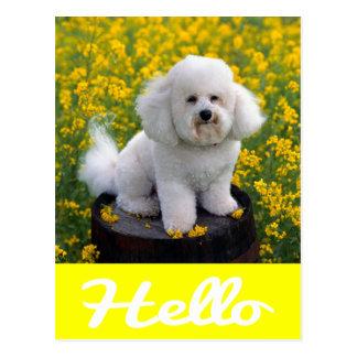 Bichon Frise Puppy Dog Hello Greeting Post Card
