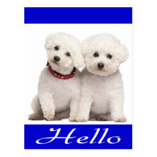 Bichon Frise Puppy Dog Hello Greeting Post Card