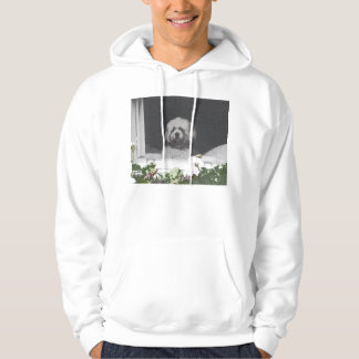 bichon in the window hoodie