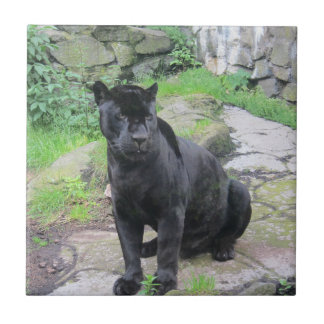 Big Black Jaguar Cat on Sitting on Rock Tile