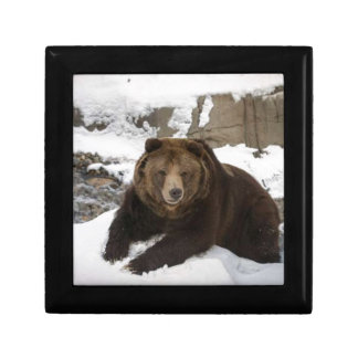 Big Female Grizzly Bear In The Snow Gift Box