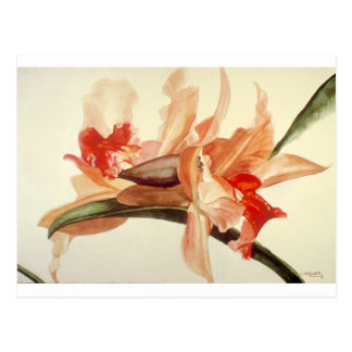 Big_Flower.png Postcard
