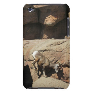 Bighorn Sheep iPod Case Case-Mate iPod Touch Case