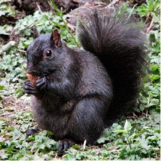 Birch Bay Squirrel Standing Photo Sculpture