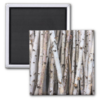 Birch Magnet