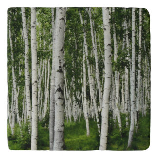 Birch Tree Forest Trivet