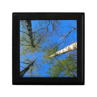 Birch trees on the background of the spring sky - gift box