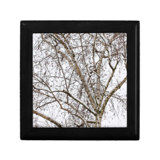 birch with snow gift box