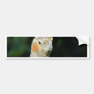Bird Bumper Stickers
