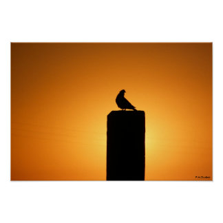Bird in the Sun by P.M.Dudiak Poster