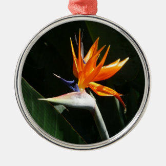 Bird of Paradise Orange Tropical Flower Silver-Colored Round Decoration