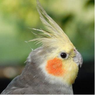 Bird Acrylic Cut Outs