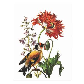 Bird Postcard