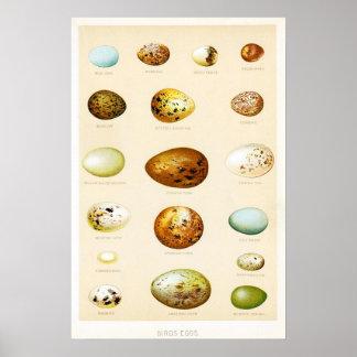 Birds Eggs Vintage Poster