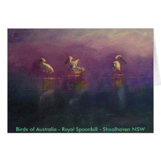 Birds of Australia - Royal Spoonbill ... Card