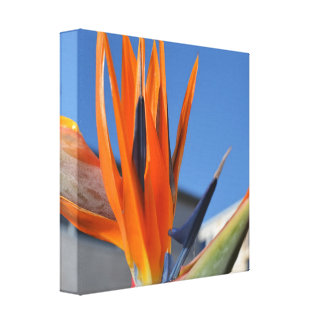 Birds of Paradise on Canvas Gallery Wrap Canvas
