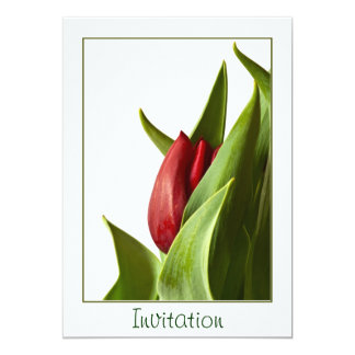 Birth of a Spring Red Tulip - Template Card