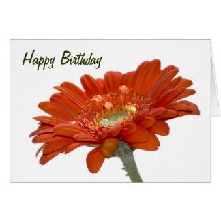 Birthday Card - Orange Daisy Gerbera Flower