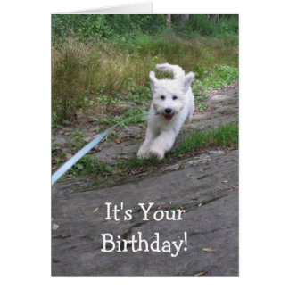 Birthday Humor with Cute Running Goldendoodle Pup Card